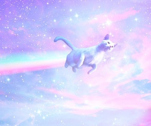 cat, rainbow, and pastel image