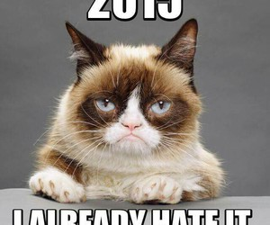 2015, cat, and funny image