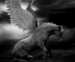 black and white, fantasy, and horse image