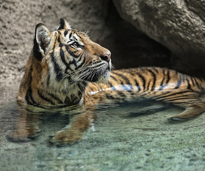 tiger, tropical, and water image