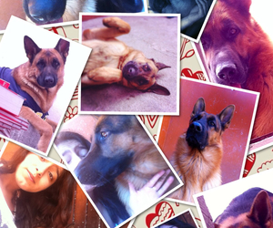 big, Collage, and dogs image