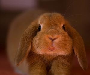 animal, bunny, and baby image