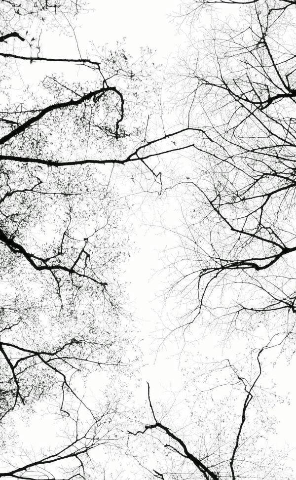 forest, sky, and tree image