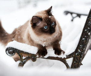 cat, blue eyes, and winter image