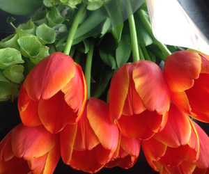 beauty, tulips, and flowers image