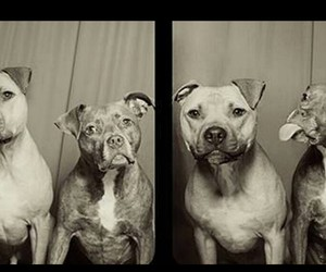 animals, sweet, and crazy image