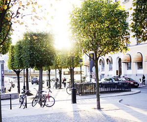 city, street, and tree image