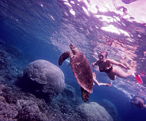 australia, Cairns, and turtle image