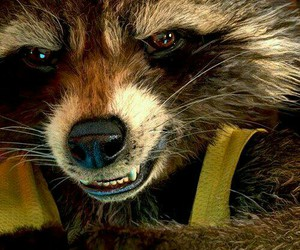 rocket raccoon and guardians of the galaxy image