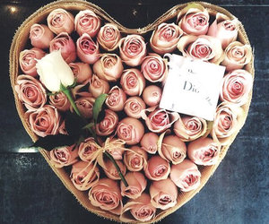 rose, flowers, and dior image