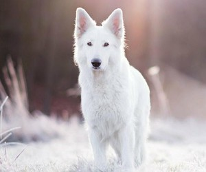 animals, puppy, and winter image