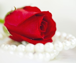 beautiful, flores, and pearls image