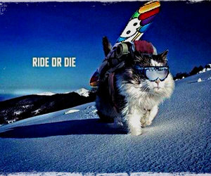 cat and snowboarding image