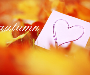 autumn, love, and heart image