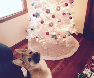 baby, best friend, and christmas image
