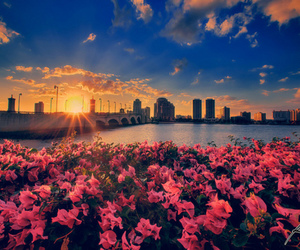 flowers, city, and sky image