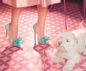 cool, dog, and dress image