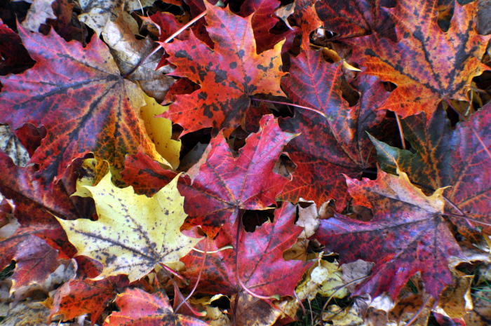autumn and colors image