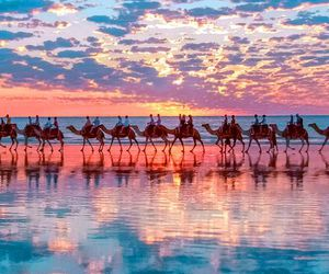 australia, camel, and camels image