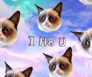 cat, background, and grunge image