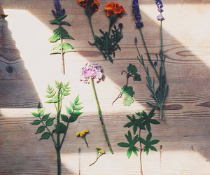 alchemy, floral, and flowers image