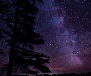 stars, forest, and night image