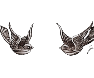 birds, png, and transparent image
