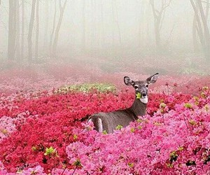 animals forest image