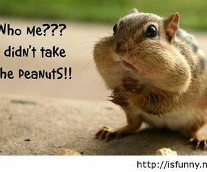 adorable, HAHAHA, and peanut image