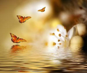 butterfly and sea image