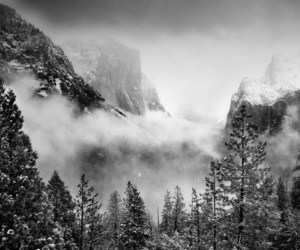 Blanc, brume, and foret image