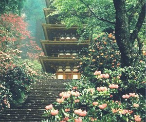 japan, flowers, and nature image
