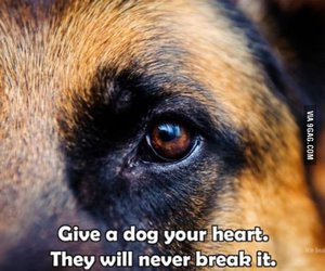 dog, love, and heart image