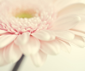 450D, eos, and flower image