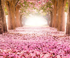 blossoms, spring, and trees image