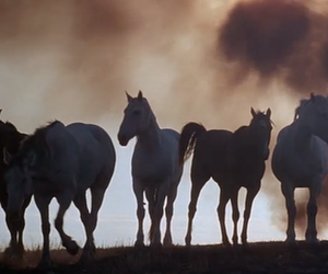 days of heaven and horse image