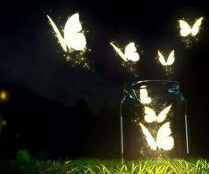 butterflies, freedom, and light image