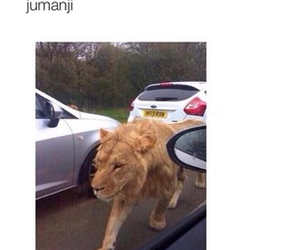 funny, lion, and tumblr image
