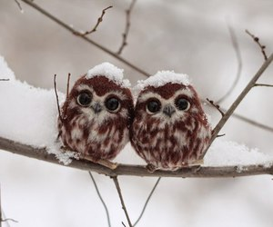 owls and cute image