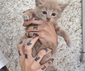 tattoo, cute, and cat image