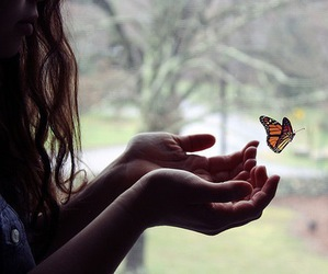 butterfly, freedom, and let it go image
