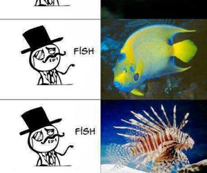 nemo, fish, and funny image