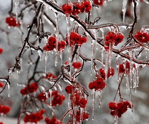 winter, ice, and red image