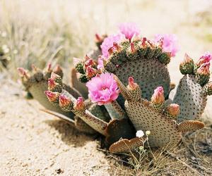 cactus, minimalist, and nature image