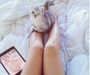 cat, cats, and fashion image