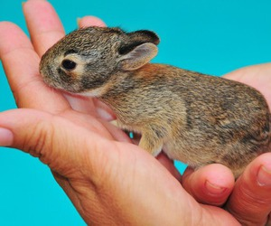 adorable, pet, and rabbit image