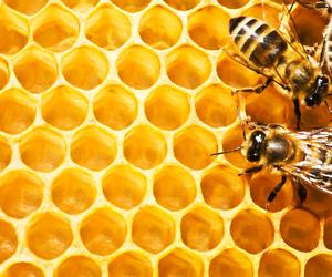 bees, honeycomb, and natural image