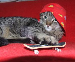 cat, skate, and cute image
