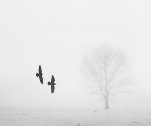 black and white, fog, and landscape image
