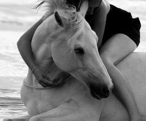 girl, love, and horse image